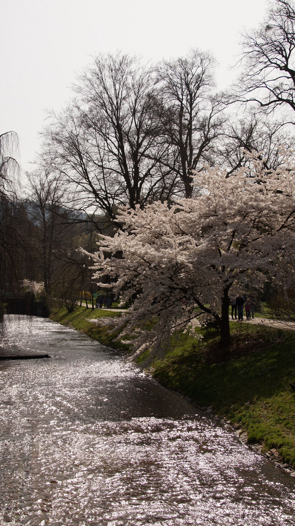 Spaziergang in der Lichtenthalerallee in Baden-Baden