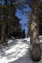 Spaziergang in der Winterlanschaft