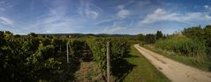 Spaziergang zu Schloss Vollrads