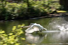 Speedy auf dem Wasser