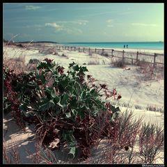 Spiagge grasse