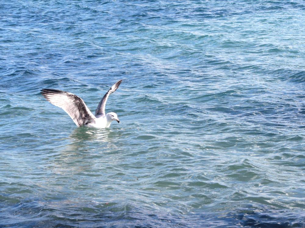 Spiccare il volo dal mare