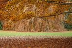 Spicchio d'autunno