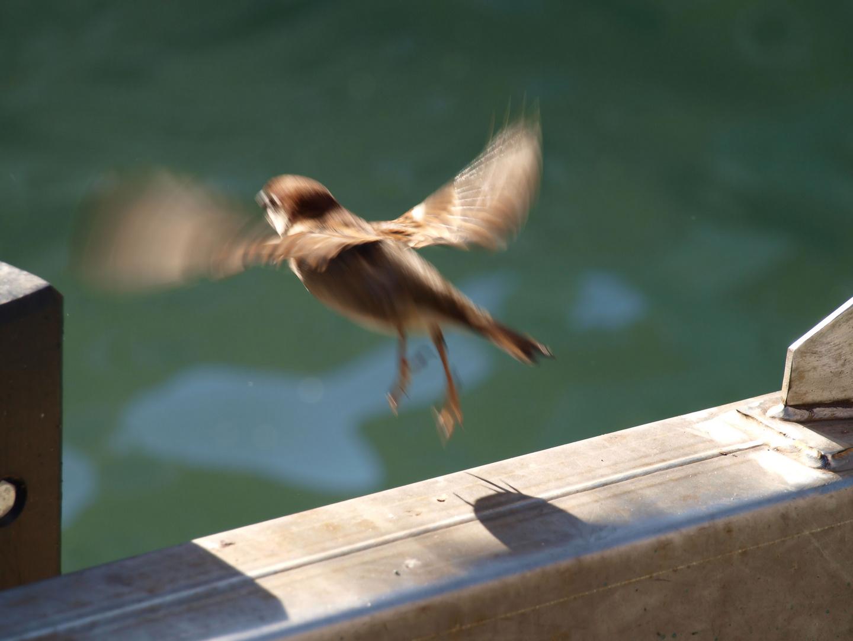 Spicco il volo dalle fondamenta di san trovaso a venezia