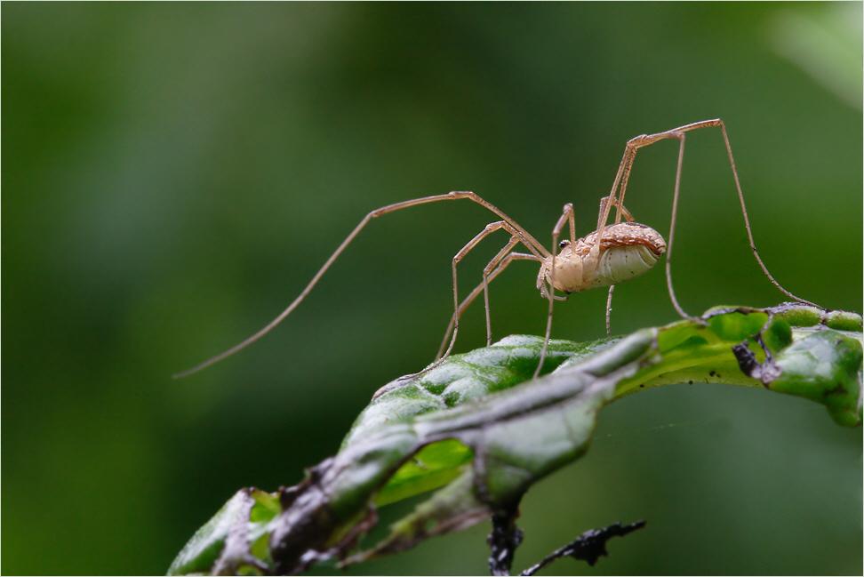 Spider #2