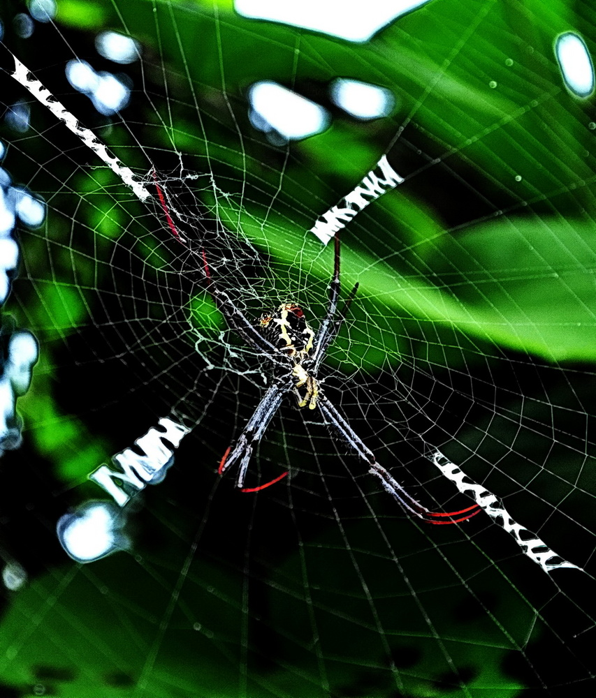 """"""" Spider """" , Aklan - Panay 2009"""