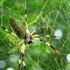 spider art