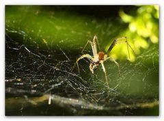 spider ....