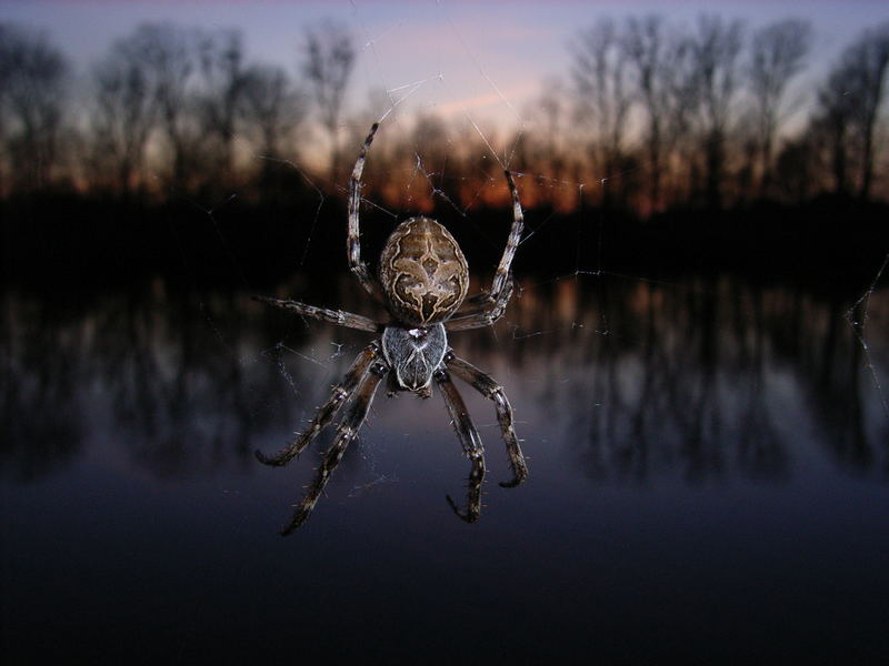 Spider before Sun falls!