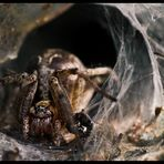 Spider in the hole