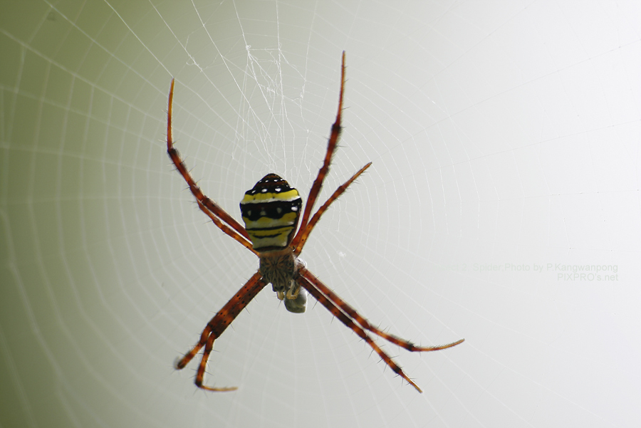 Spider in the light