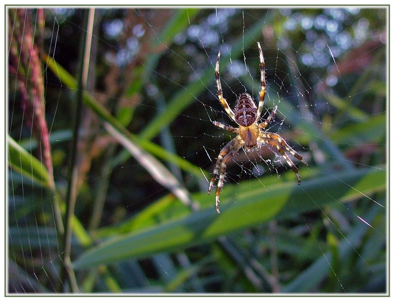 Spider in the Sun ...