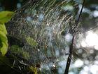 Spider, Spinnennetz