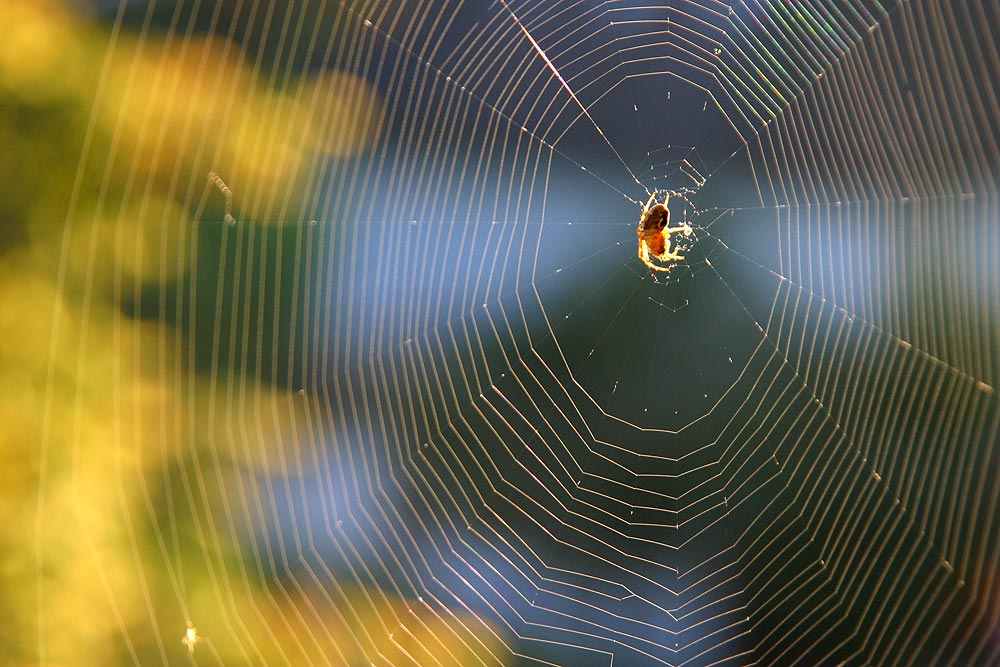 Spider - the neighbour