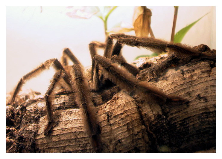 """spider vonner """"betreuten"""" & brasilientourgefährtin"""