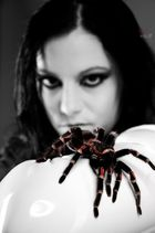 Spider vs. Model I