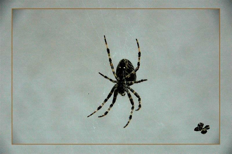 *** Spider-Wife * hands up! ***