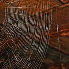 spider work