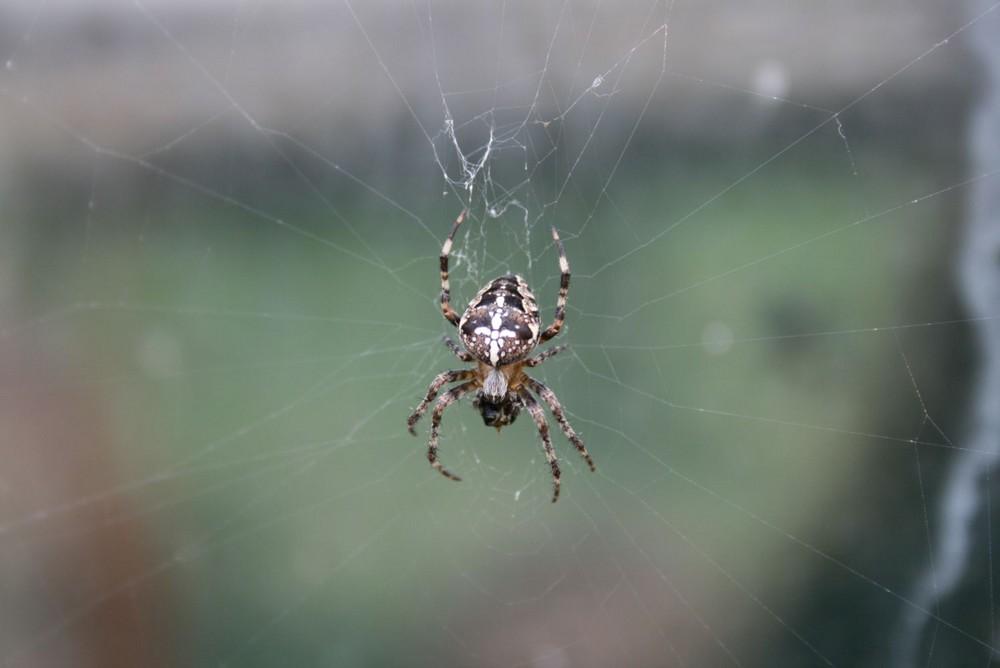 Spiderman bei meinem Bruder im Garten