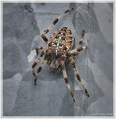 - Spider(man) -