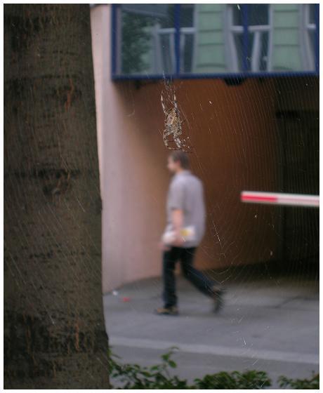 Spiderman goes Uptown - Die Natur erobert die Stadt zurück