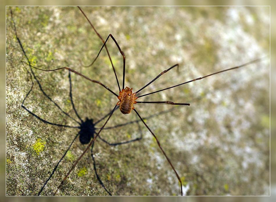 Spiderman oder Spiderfrau...