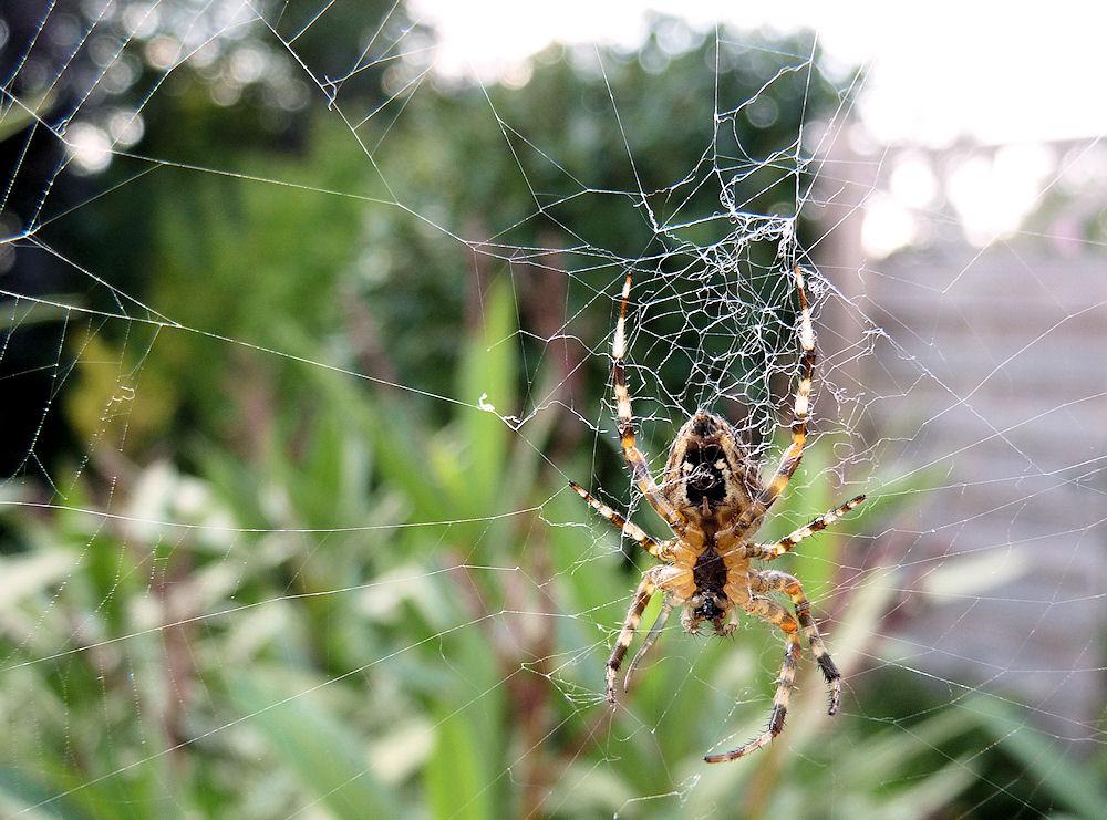 spider.man...I