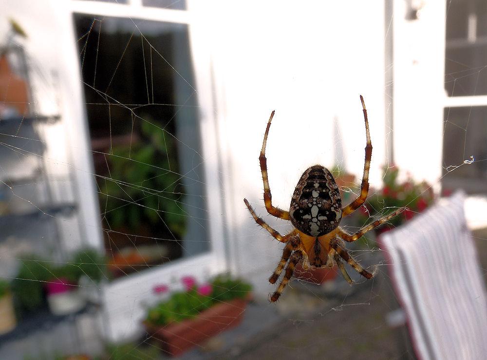 spider.man...II
