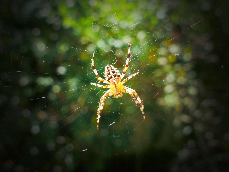 Spidermesh