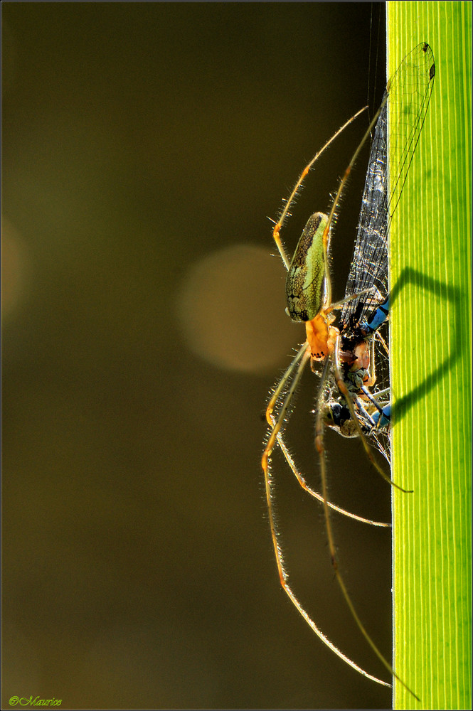 spiders kiss