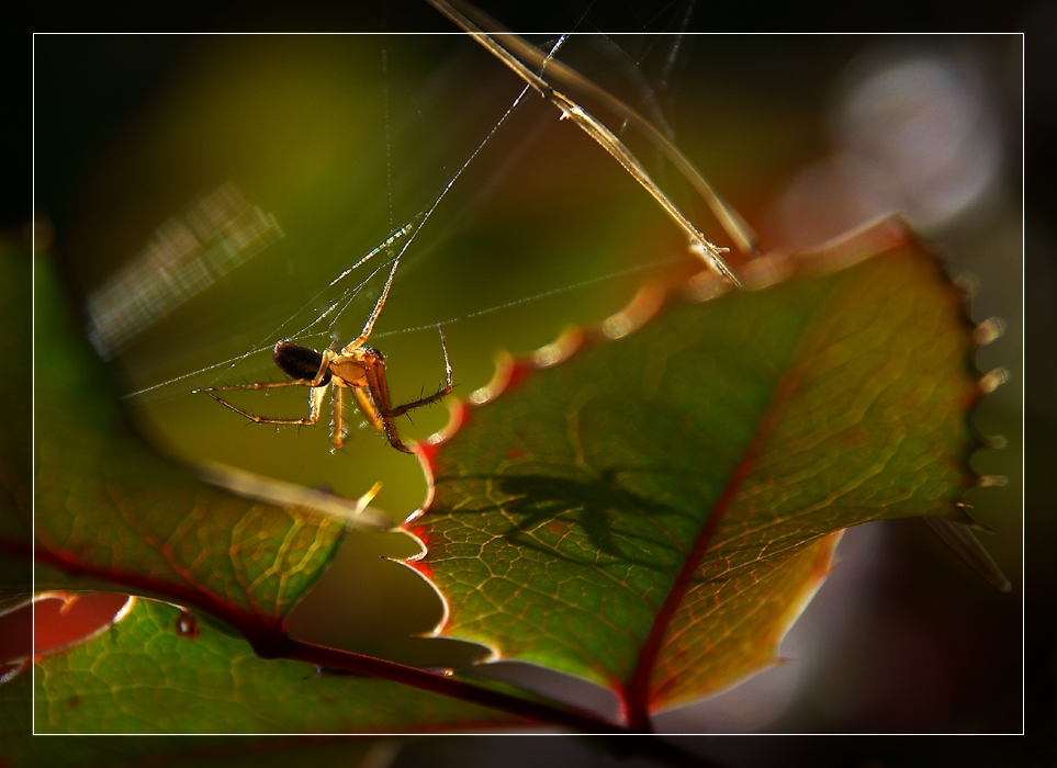 spider`s shadow