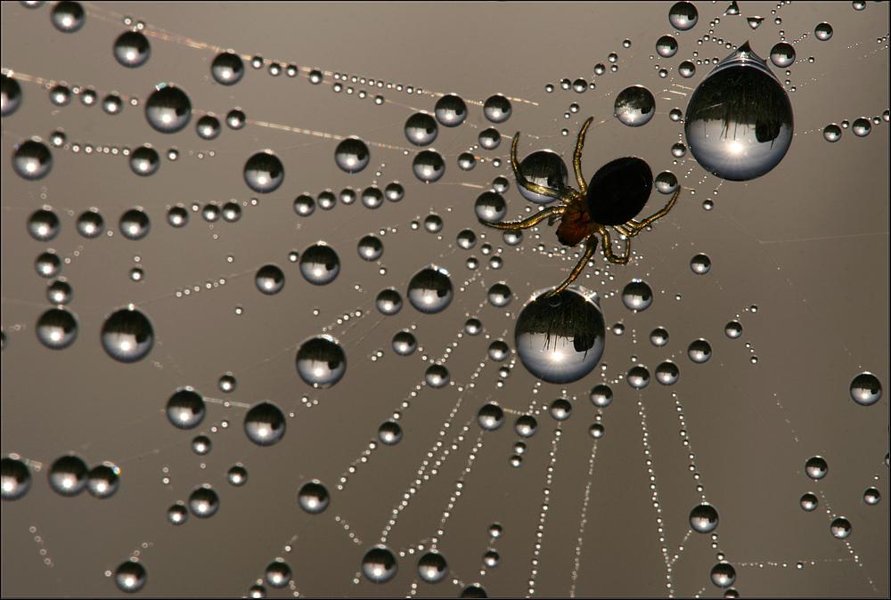 spider's  waterworld