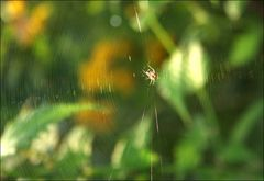Spiderweb.....
