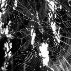 Spiderweb... blk and white