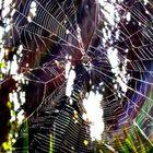 Spiderweb- color; edited more