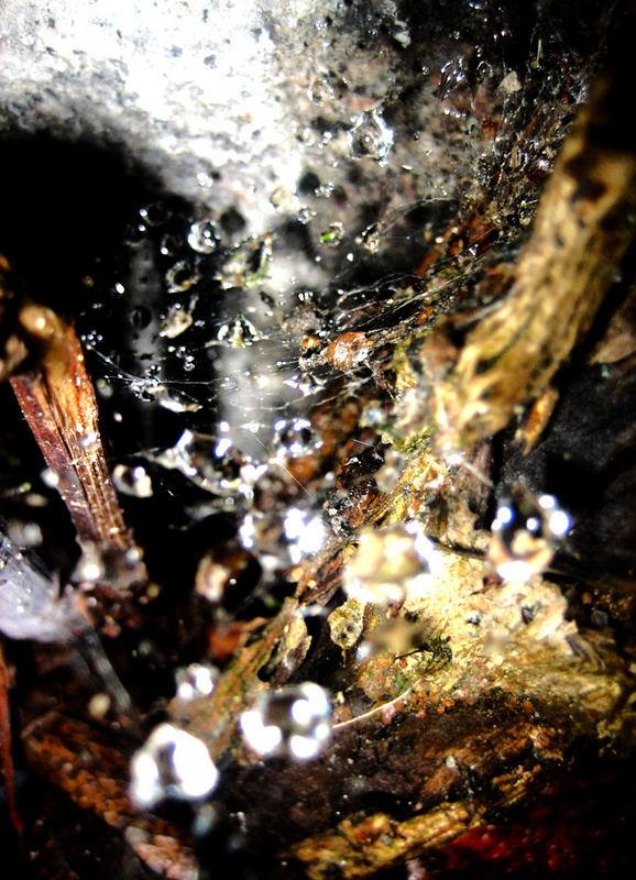 Spiderweb maybe?