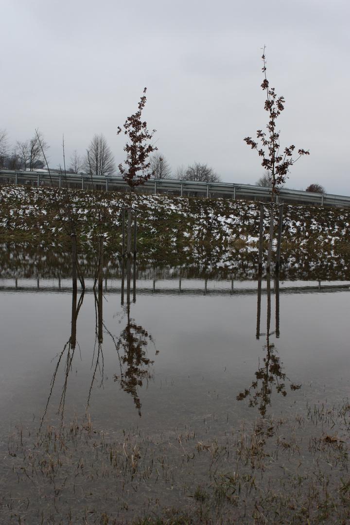 Spiegel-Bäume