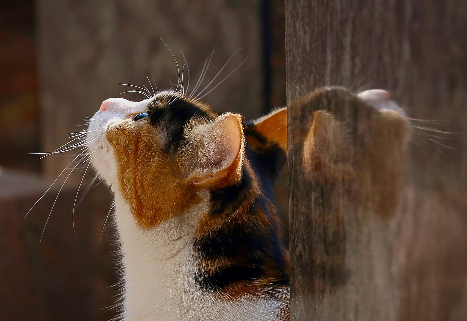 Spiegel Katze