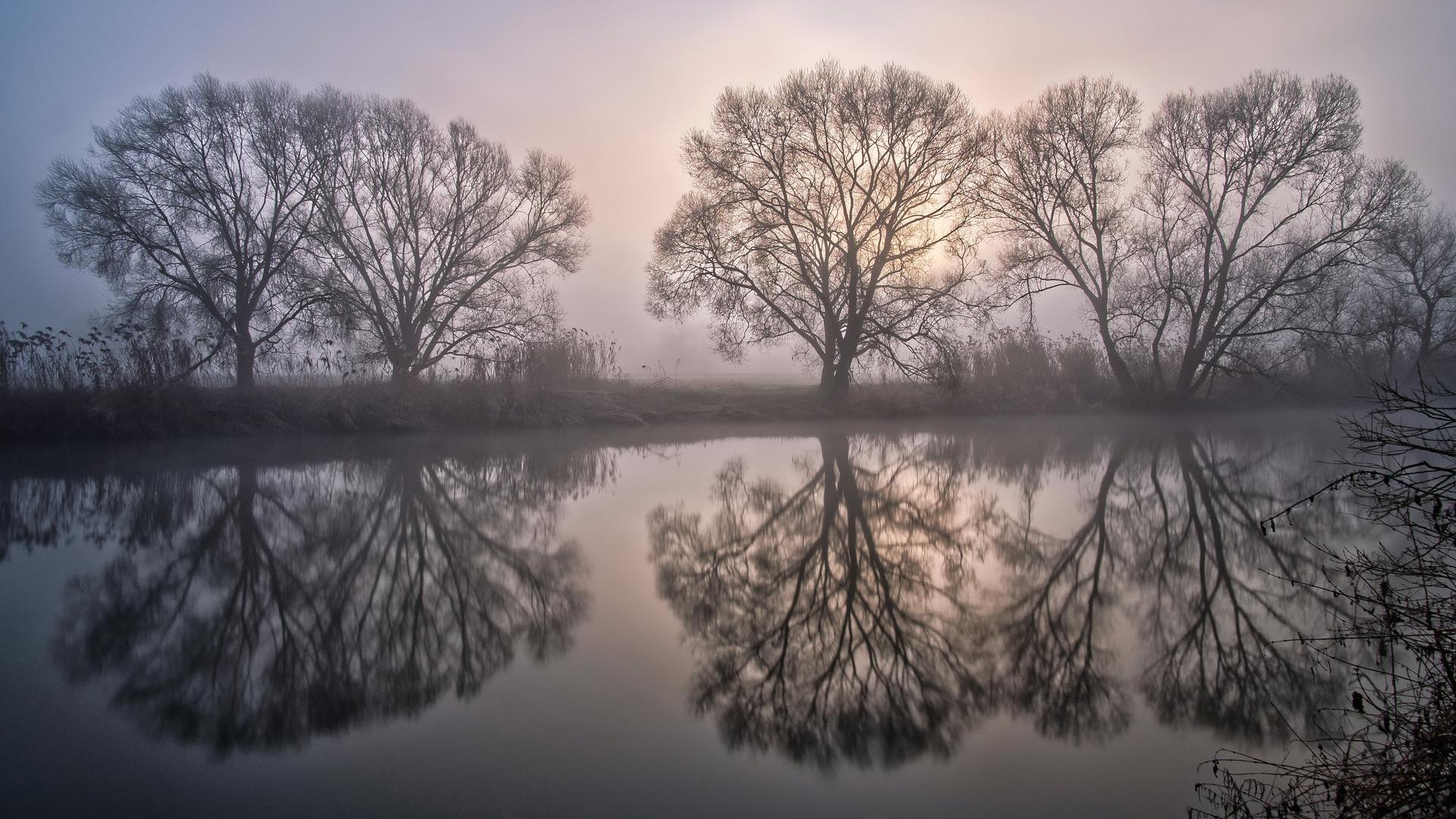 Spiegelbäume im Nebel