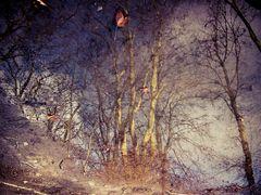 Spiegelbild der Bäume