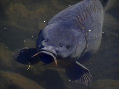 Schnecke•Fisch•Krebs