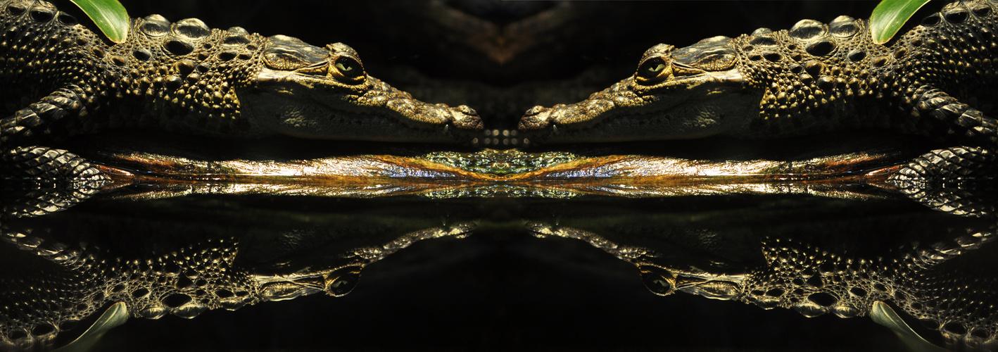 spiegeln x4