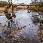 Spiegeltag - Am Teich