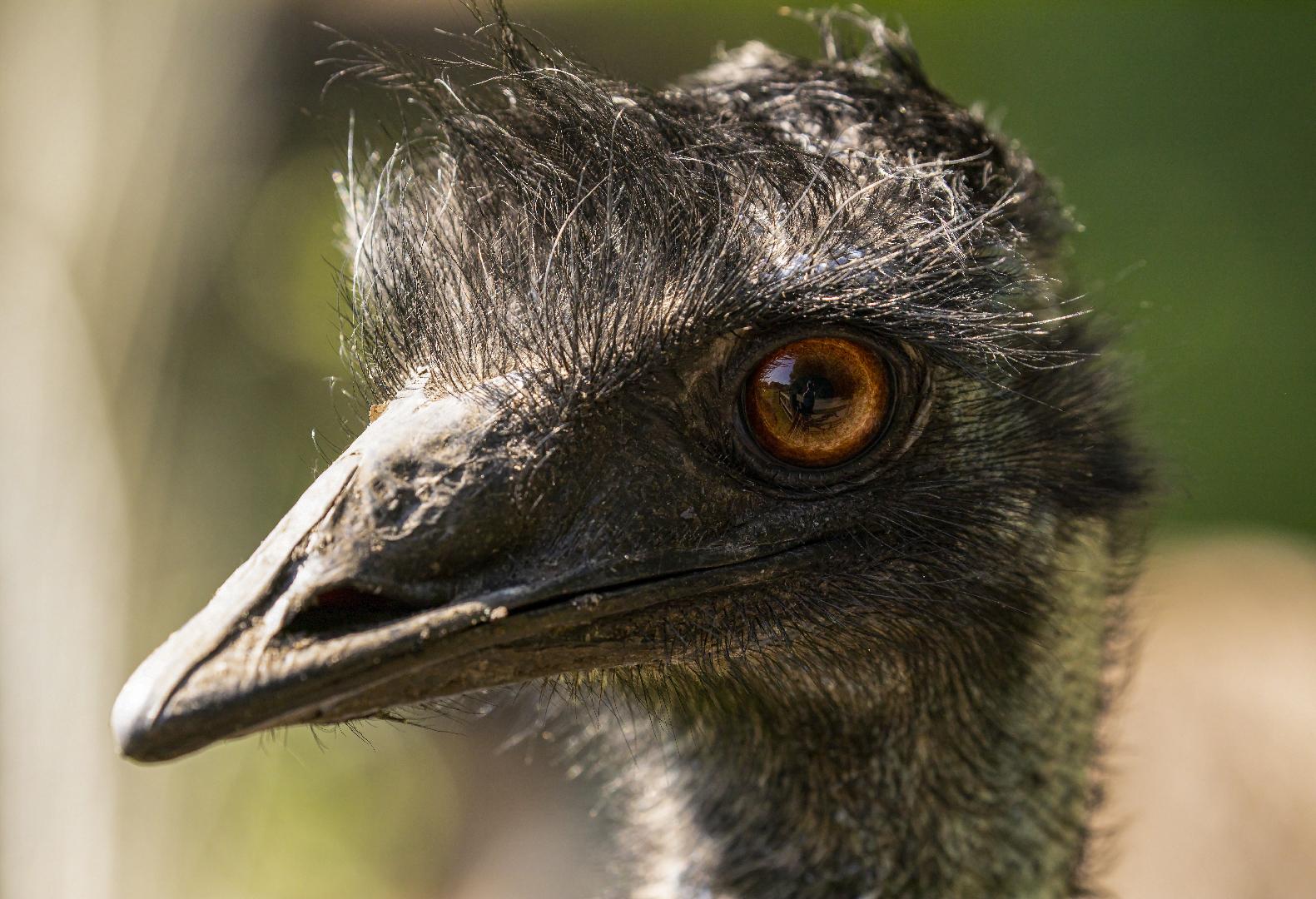 Spiegeltag - Emu