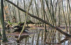 Spiegeltag: Etwas nass im Wald