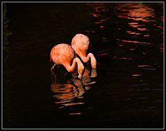 Spiegeltag- Flamingopaar