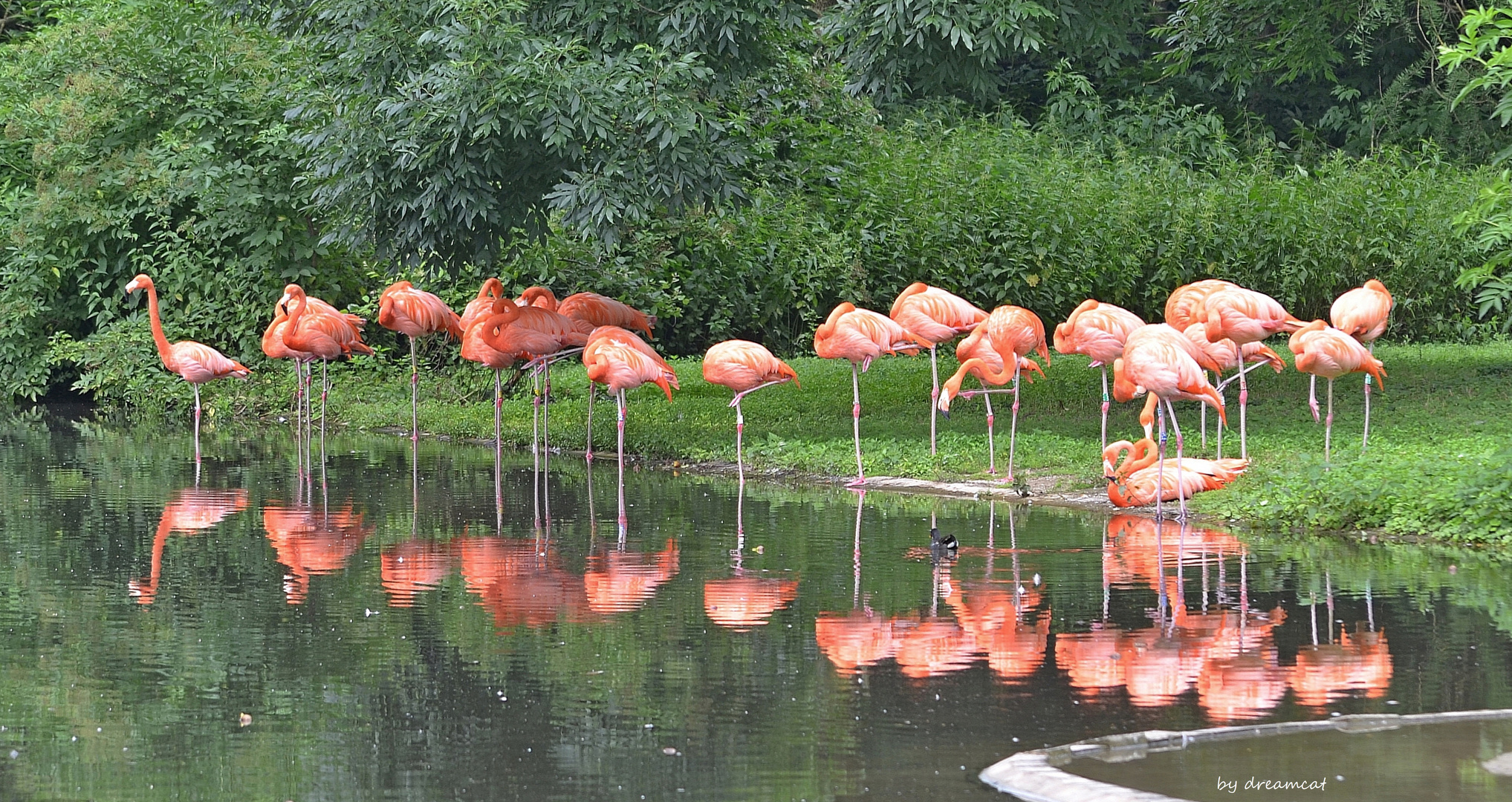 Spiegeltag -Flamingos -