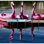 Spiegeltag- Flamingo's unter sich