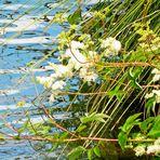 Spiegeltag- Naturspiegelung