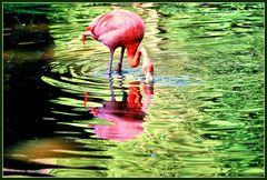 Spiegeltag- Roter Flamingo